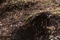Charcoal-stained soil before excavation: photo Chris Place