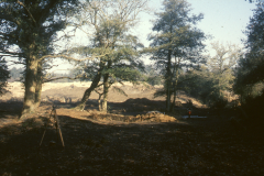 General view of excavation: photo Chris Place