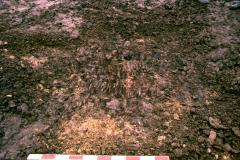 Roffey, Brook Lane medieval house foundations during excavation: photo J. Hodgkinson