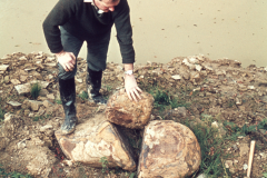 Roger Adams with some large siderite nodules: photo anon